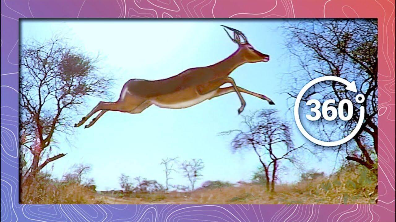 maxresdefault 3 - فیلم واقعیت مجازی حیات وحش افریقا